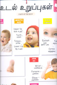 Tamil book My Cute Charts உடல் உறுப்புகள் / PARTS OF THE BODY (Front and Banck)