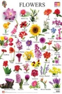 Flowers (Educational Wall Charts) - educational wall charts FLOWERS