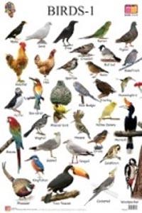 Birds: 1 (Educational Wall Charts) - educational wall charts BIRDS 1