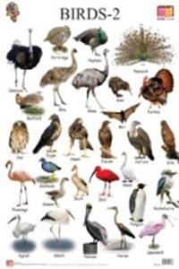 Birds: 2 (Educational Wall Charts) - educational wall charts BIRDS 2
