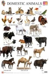 Domestic Animals (Educational Wall Charts) - educational wall charts DOMESTIC ANIMALS